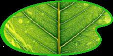 Vernici e prodotti naturali - Colorificio Pecchio